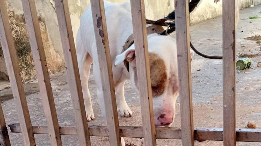 Cachorro foi encontrado em situação de maus-tratos