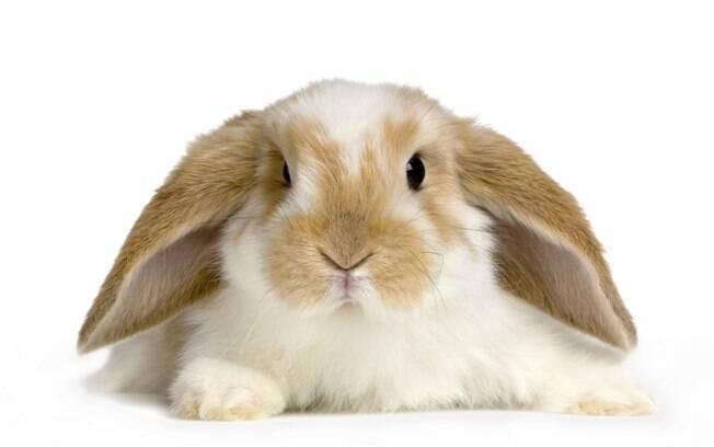 O que eu preciso saber antes de adotar um coelho?