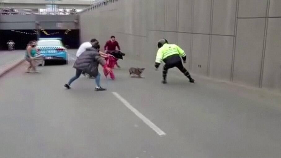 Cachorra foge de casa e paralisa trânsito em avenida da capital peruana