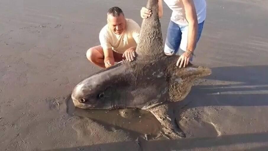 Animal raro foi encontrado no litoral do Piauí
