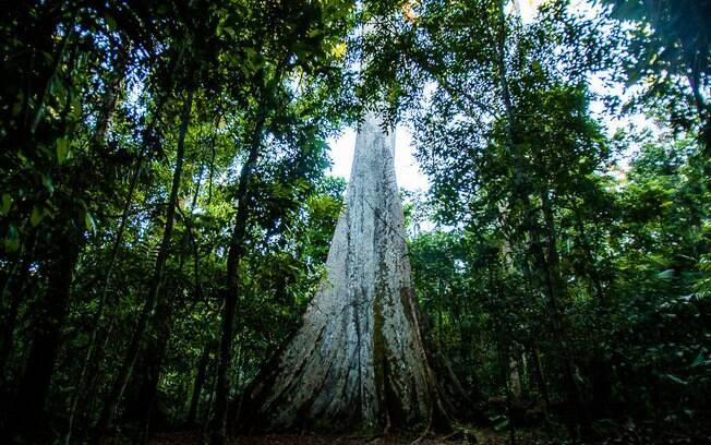 Terras indígenas são essenciais para o equilíbrio do clima na Amazônia