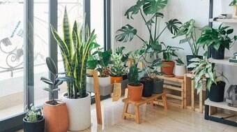 Precisa mudar as plantas de lugar?  Veja como fazer a transição