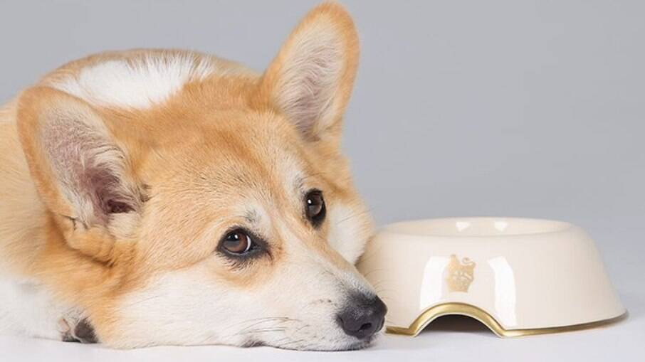 Rainha Elizabeth II lança coleção de produtos voltados para animais de estimação