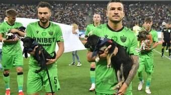 Jogadores levarão cães abandonados a campo