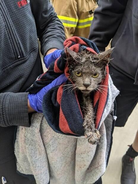 Gato em perigo foi salvo graças a funcionário de fábrica