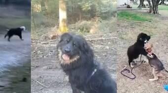 Cão encontrado com cabeça presa em garrafa ganha novo lar