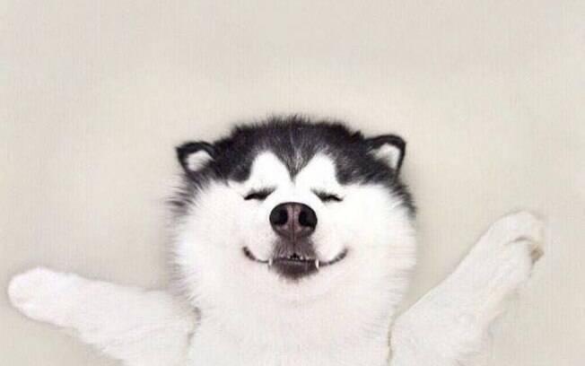 Maru, cachorro da raça husky siberiano que bomba no Instagram