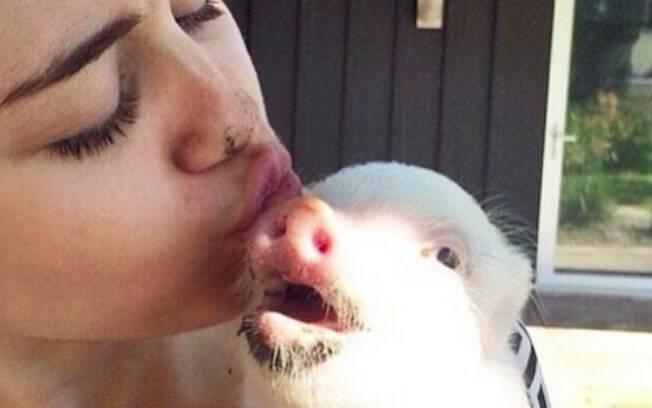 Miley Cyrus e sua porca, Bubba Sue