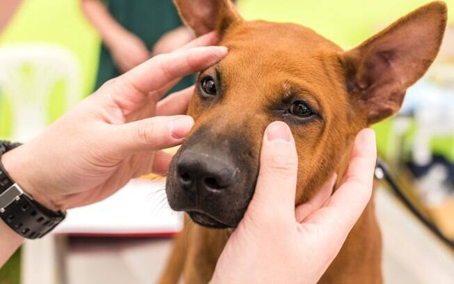 O terçol canino também é uma condição que atinge os animais de estimação