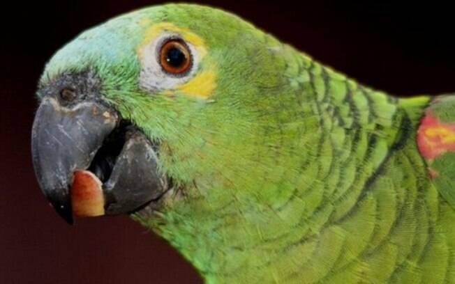 O papagaio vive em torno de 80 anos