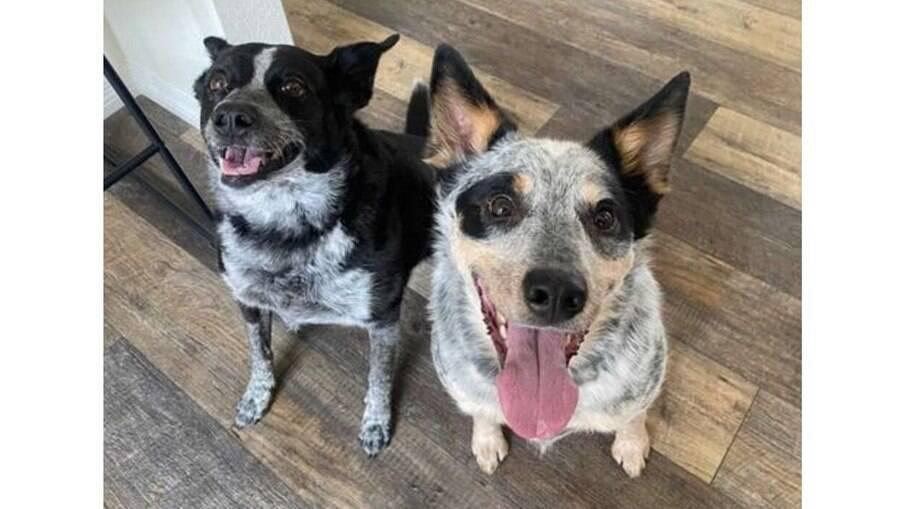 Leyla e Bear, a dupla canina que criou o próprio modo de brincar de bolinha