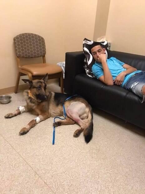 Rex foi baleado no pescoço e nas pernas após se atirar na frente dos assaltantes
