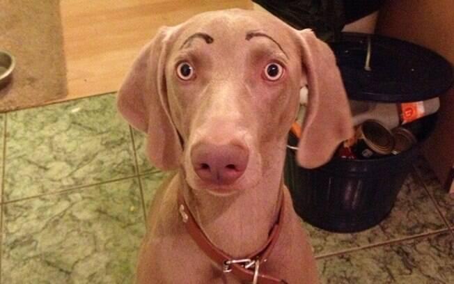 Cachorros com sobrancelhas