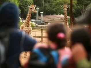 Os zoológicos são um programa bacana para dias ensolarados