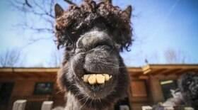 10 animais engraçados e nada fotogênicos