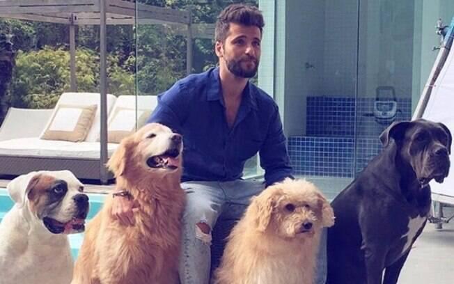 O ator Bruno Gagliasso nunca escondeu o amor pelos animais. É dono de nove cachorros, todos de grande porte