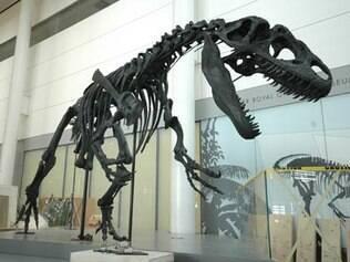 Dois fósseis de dinossauros foram instalados no aeroporto de Toronto