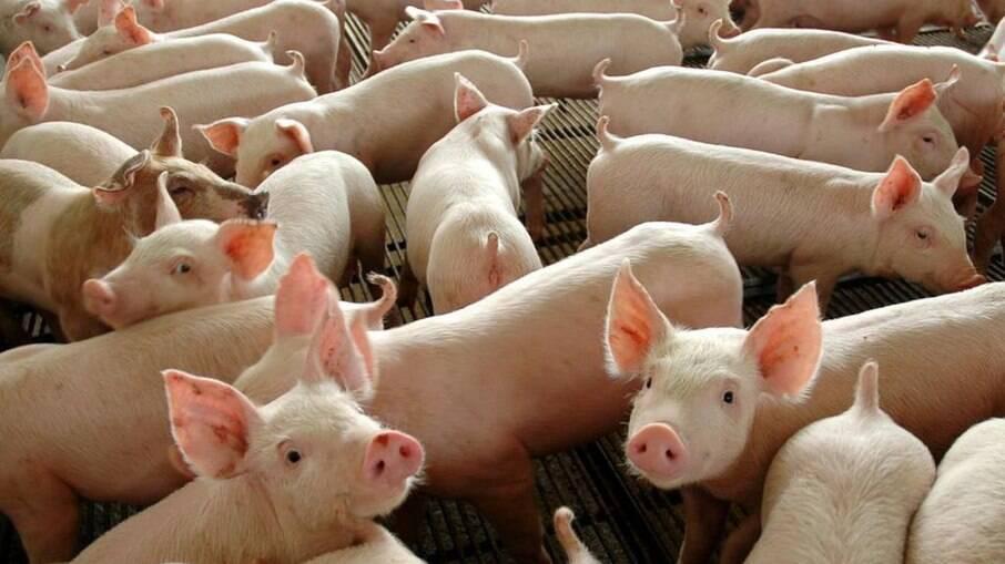 Carne bovina acumula alta de 25% em 12 meses