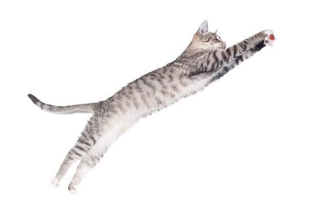 Existe a lenda de que os gatos caem de pé sempre, mas será que é verdade ou mito? Desvende de uma vez por todas essa antiga teoria