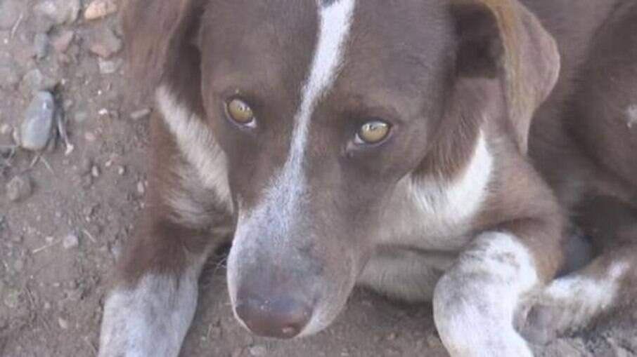 Cachorro volta para encontrar dono em mina de carvão que desabou