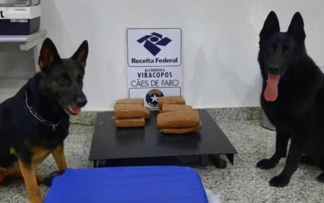 Receita Federal em Viracopos apreende 9,8 quilos de maconha