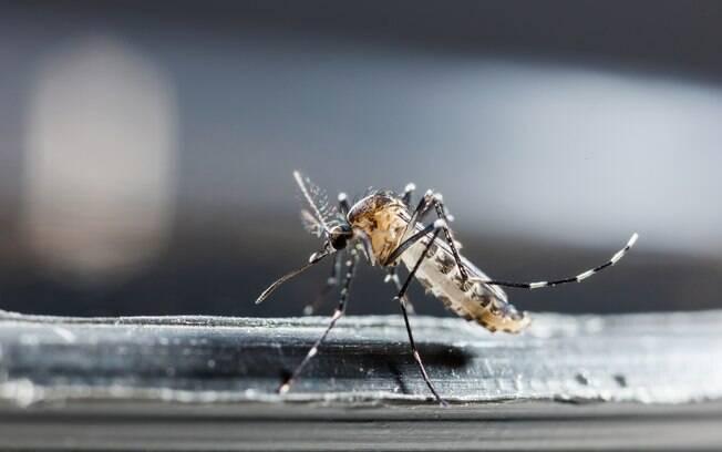Mesmo com aumento de casos de dengue em São Paulo, maioria dos estados registra queda nas notificações da doença