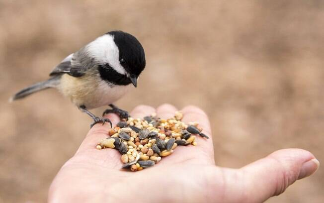É importante conhecer quais são os alimentos proibidos para mantê-los longe do alcance das aves