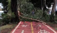 Serviço de remoção de árvores cai 30% e reclamações aumentam