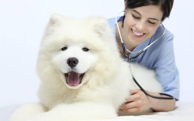 A leucemia em cães pode ser linfoide ou mieloide e costuma atingi-los ainda quando filhotes, mas é possível tratar