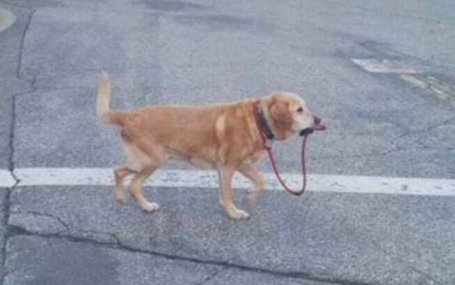 Nunca desista de procurar pelo seu cachorro perdido