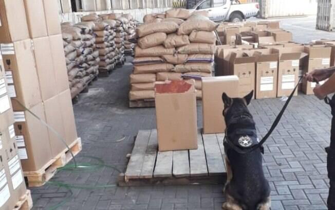 O cão farejador sinalizou a presença da droga e confirmou as suspeitas