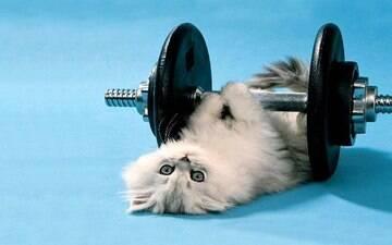 Eles também precisam! Confira as melhores formas de exercício para gato