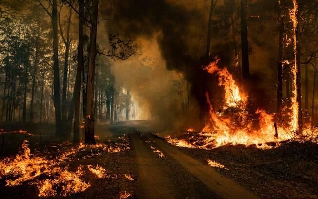 Ventos fortes agravam focos de incêndios em diversas regiões da Austrália