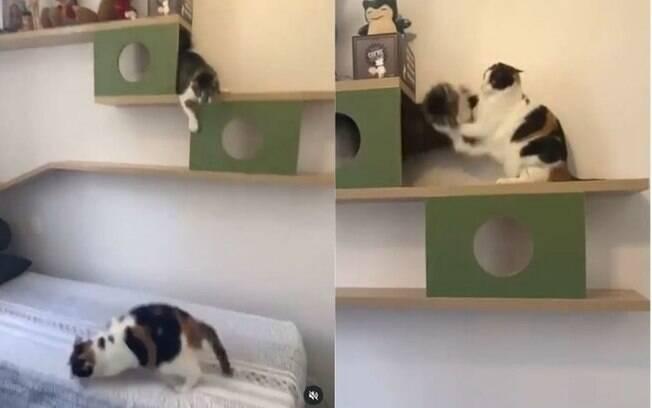 Confira a briga felina mais fofa da internet