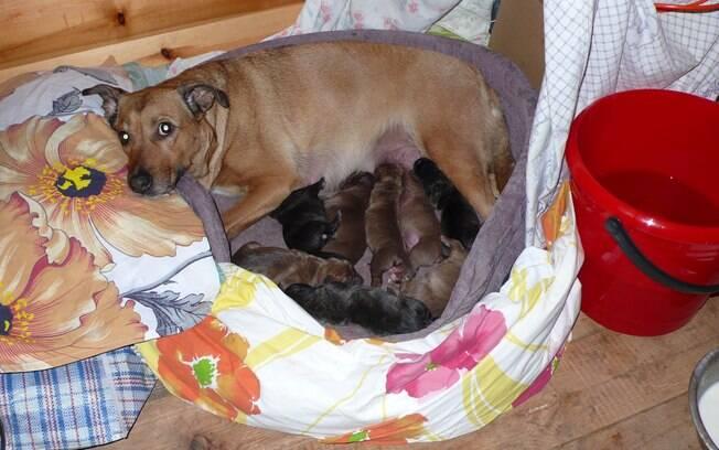 É preciso ficar atento aos cuidados com filhotes de cachorro para crescerem forte e saudável