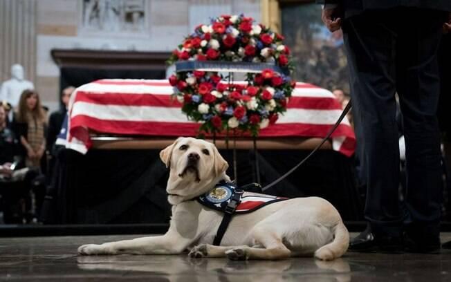 Cão de Bush pai, Sully, que tem um perfil no Instagram, vai ajudar militares da ativa e veteranos de guerra