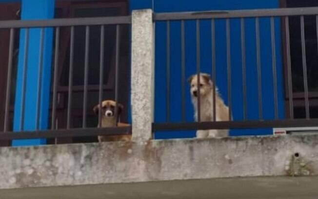Os cães foram abandonados pelo dono que mudou de casa