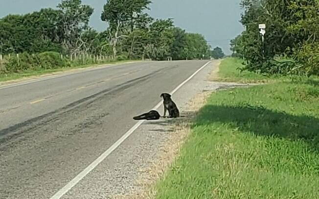 Cão se recusa a sair do lado de irmã morta em estrada