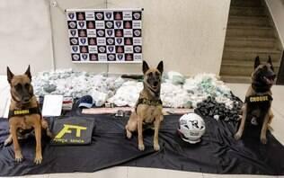 Canil da PM, Força Tática e ROCAM fazem apreensão de drogas na zona sul de SP