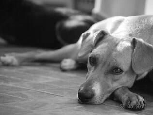Kate Lucia, cadela de Karem Souto