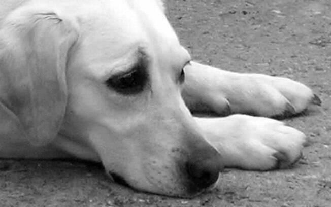 O câncer afeta muito a vida dos cães