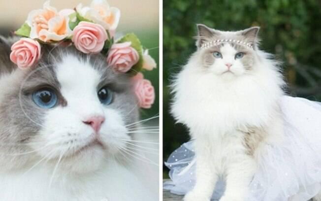 Essa gatinha parece uma princesa.