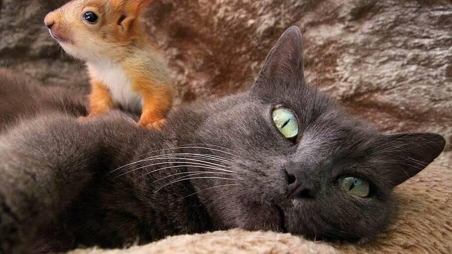 Pusha adotou quatro esquilinhos abandonados