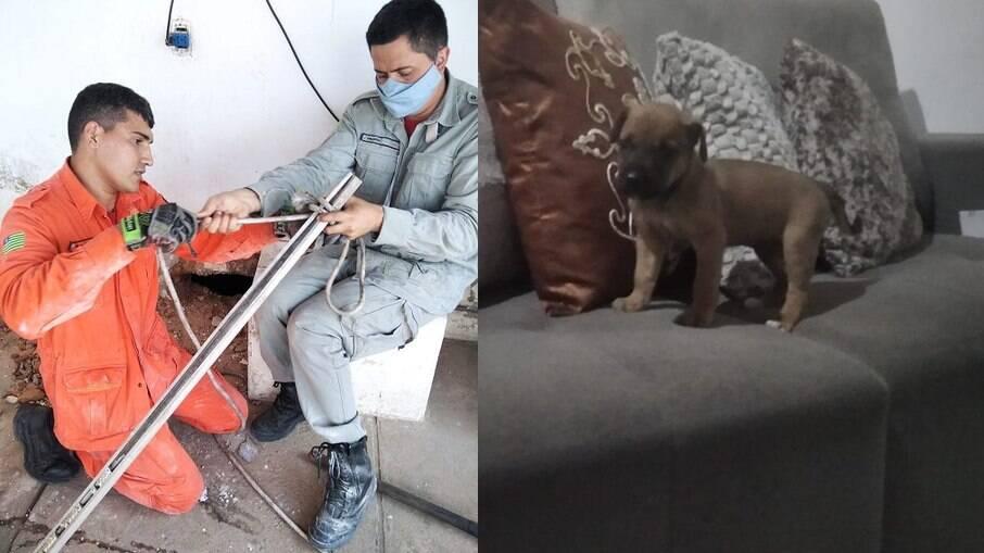 Filhote de cachorro fica preso em parede de casa e é resgatado pelo Corpo de Bombeiros, em Teresina