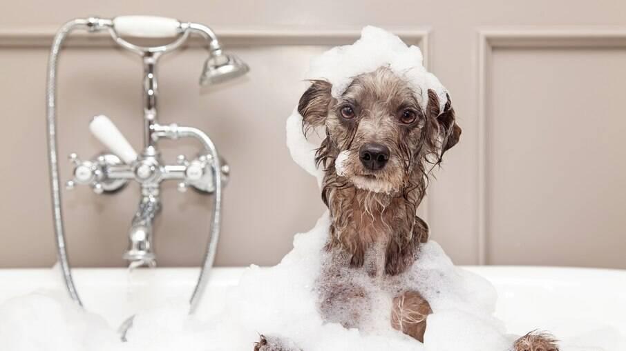 A frequência de banhos no cachorro durante o verão não precisa ser alterada
