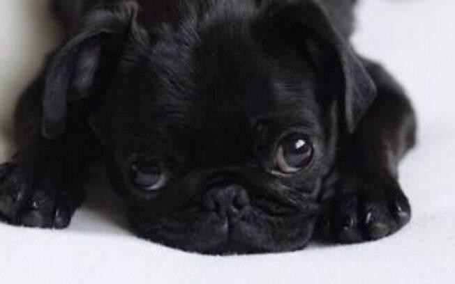 A diarreia deixa o cão indisposto