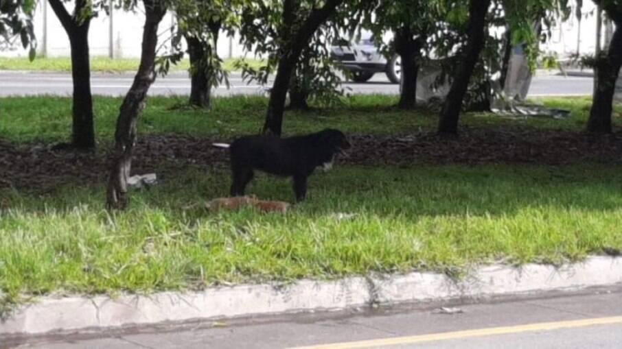 Cachorro passa dias protegendo corpo de cadela atropelada
