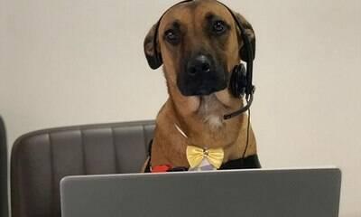 Cão ganha emprego como vendedor em loja de carros