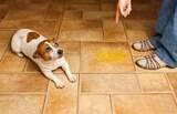 Como e quando dar uma bronca no animal de estimação