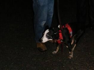 Sparky estav assustado logo após o resgate
